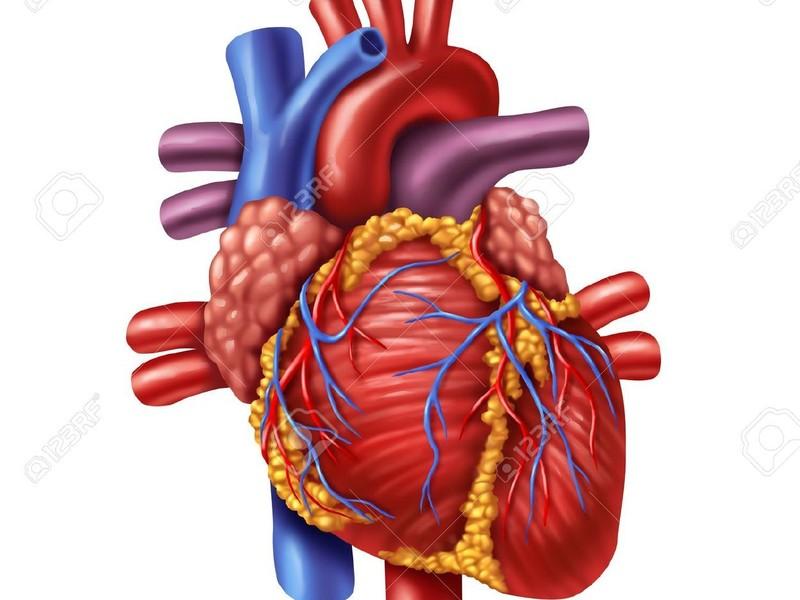 Zorgprogramma hartfalen gezondheidscentrum lloyd s terras for Prognose hartfalen